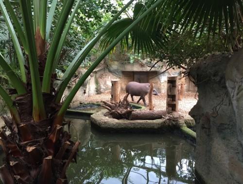 Tapir im Hintergrund