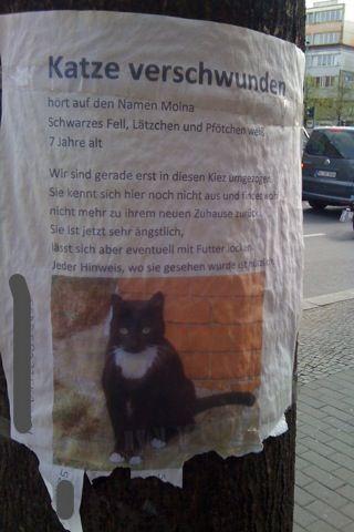 Katzensuchbild Moina